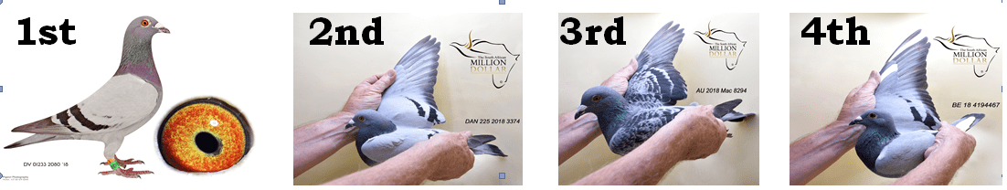 The 23rd South African Million Dollar Pigeon Race The Final Race One Loft Racing A word of gratitude the samdpr would just like to thank all fanciers worldwide for their very positive feedback and support when we decided to postpone the main race to wednesday because of adverse. the 23rd south african million dollar
